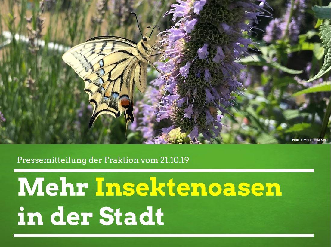 Mehr Insektenoasen in der Stadt
