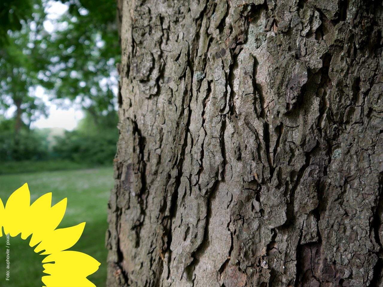 Neue Wege für alte Bäume